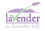 Lavender in Lavender Hill - All natural ingredient lavender products | Body Lotion, Essential Lavender Oil & Lavender Hope Soap