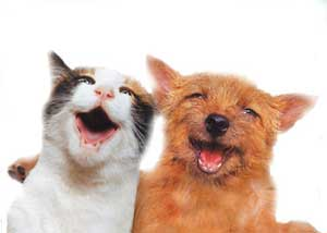 laughing-cat-and-dog